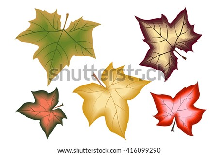 A set of 5 multicolored leaves of maple. Isolated on a white background,  vector collection. EPS10. - stock vector