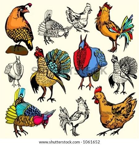 A set of 6 vector illustrations of birds. - stock vector