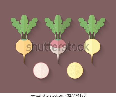 A set of Vegetables in a Flat Style with an Oblique Blend Shadow - Turnip and Rutabaga - stock vector