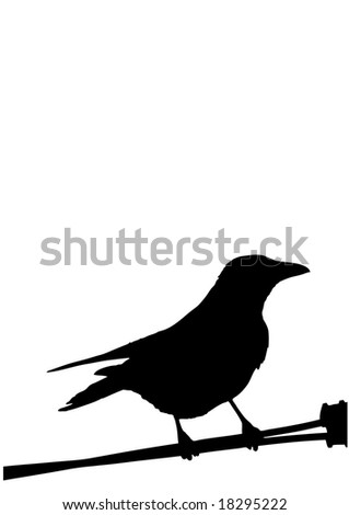 a silhouette of a bird isolated on white - stock vector