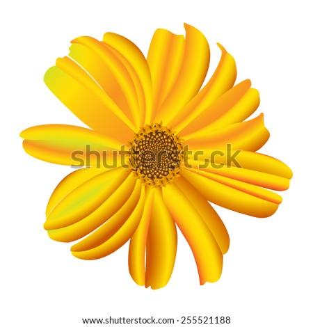 A single daisy flower. Vector. - stock vector