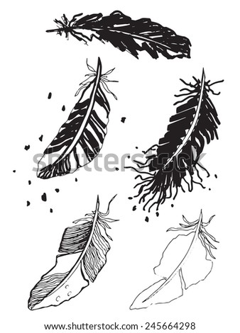 A sketch drawing of stylized feathers - stock vector