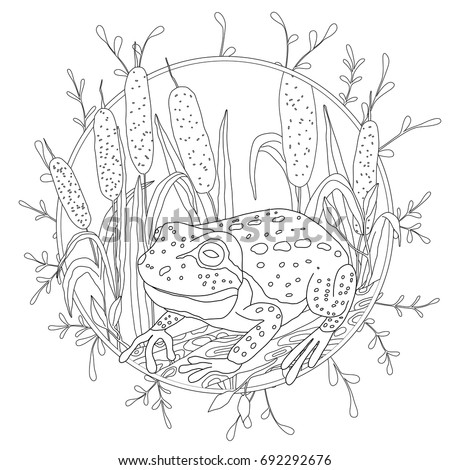 A Stylized Frog Sits Among The Reeds Sketch For Adult Anti Stress Coloring