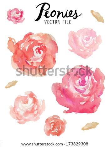 A Vector Floral Collection of Painted Pink Watercolor Peonies  / Pink and Orange Watercolor Peonies Vector Collection - stock vector