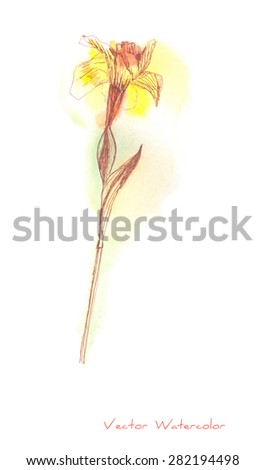 A vector painting of a Narcissus (or Daffodil) flower initially made in watercolor and Chinese ink - stock vector
