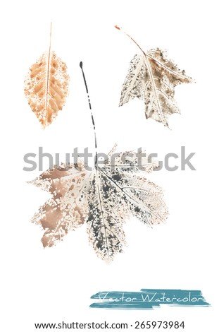 A vector watercolor: painting of autumn leaves of maple tree and ash tree made as watercolor monotype - stock vector