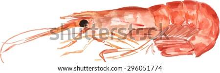 A watercolour shrimp, scalable vector drawing - stock vector