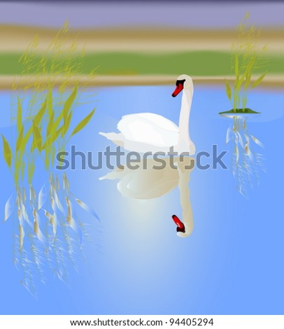 A white swan in a picturesque lake. Vector illustration.