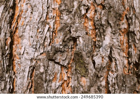 Abstract colored illustration bark of a pine tree  - stock vector