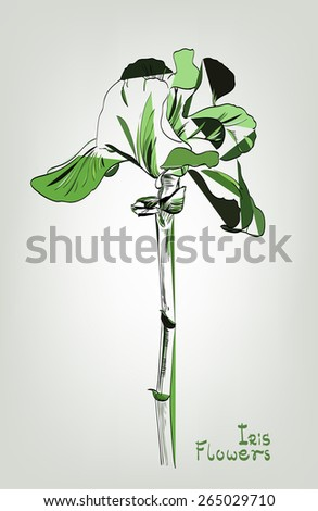 Abstract colored stylized iris for your design. Isolated colored graphic flower on gray background. - stock vector