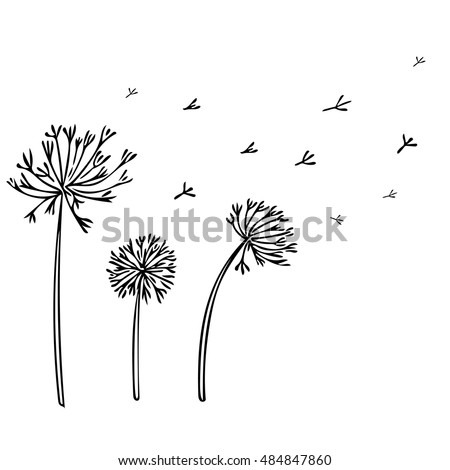 Abstract Dandelion Background with black flowers on white background. Vector Illustration