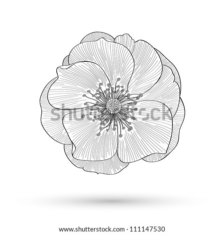 Abstract floral background. Vector flower rose. Element for design. - stock vector