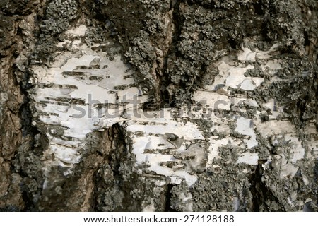 Abstract illustration bark of a birch tree