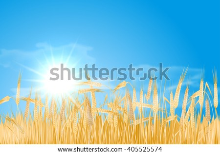 Abstract summer landscape with barley cornfield, sky, sun and clouds - vector illustration - stock vector