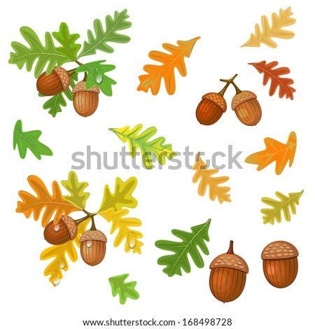 Acorn with leaves - stock vector