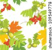 Acorns, rowan and maple leaves isolated on the white. Autumn background. Vector - stock vector