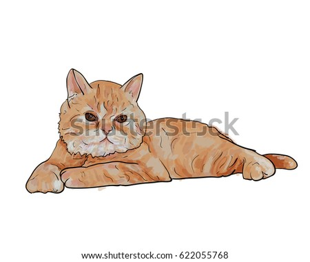 Adorable lying persian cat isolated on white background,vector illustration