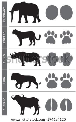 Africa's Big Five Animal Tracks: Elephant, Lion, Leopard, Buffalo and ...