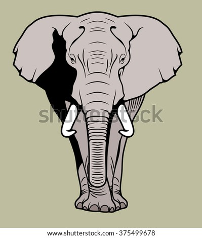 African elephant, front - stock vector