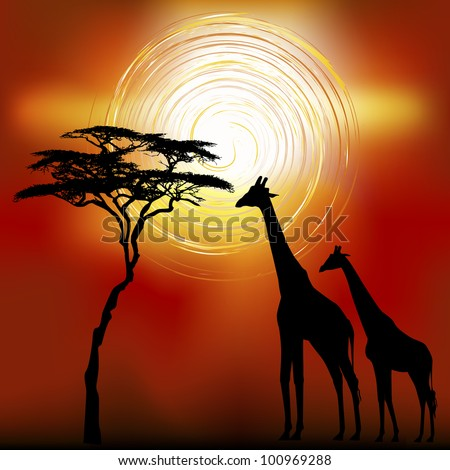 African landscape flora and fauna in sunset time with giraffes. Vector - stock vector