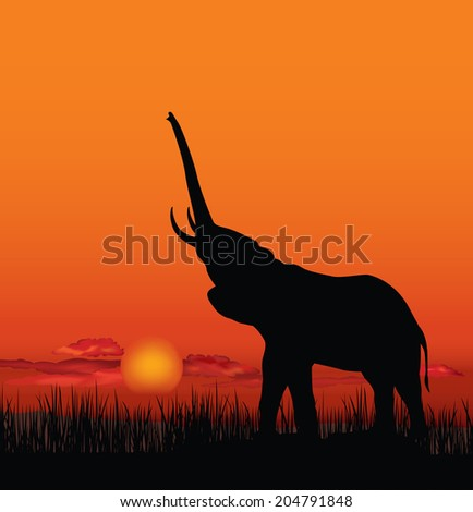 African landscape with animal silhouette. Savanna sunset background.