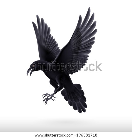 Aggressive black raven isolated on white background  - stock vector