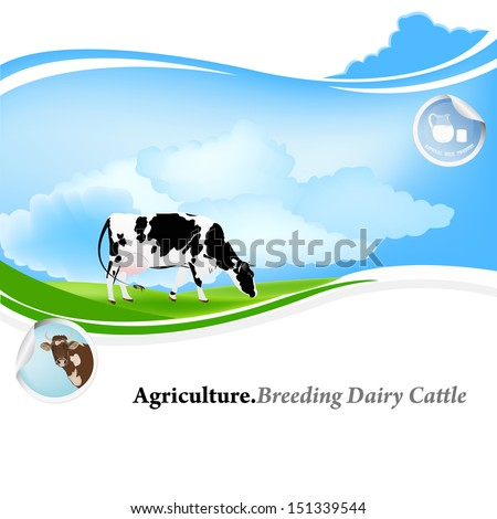 Agriculture.Breeding dairy Cattle.Vector background - stock vector