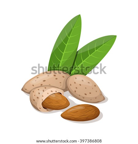 Almonds with leafs isolated on white. Vector illustration.