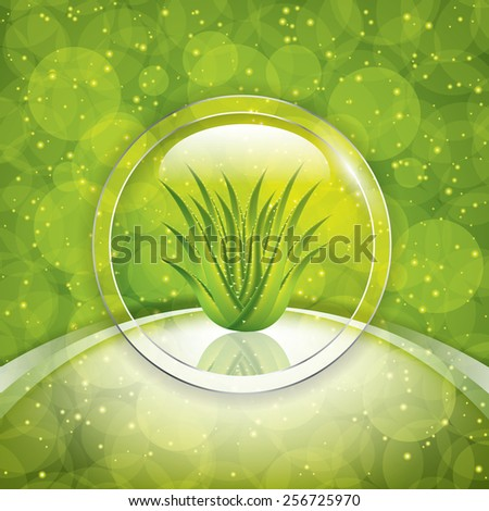 Aloe Vera.Vector illustration - stock vector