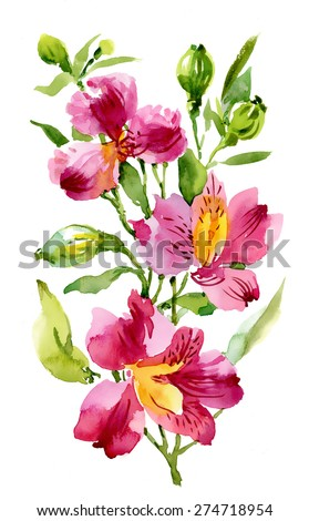 Alstroemeria flower plant isolated on white background. Watercolor vector illustration. - stock vector