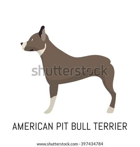 American Pit Bull Terrier. Dog, flat icon. Isolated on white background. - stock vector