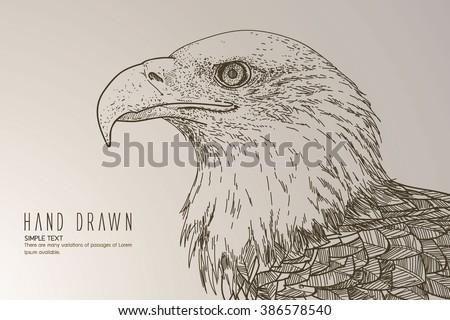 American white-headed eagle - stock vector