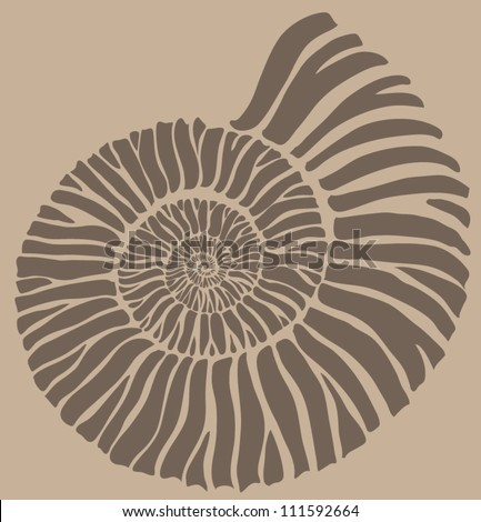ammonite shell - stock vector