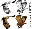 An eagle flying, lineart and colored - stock photo