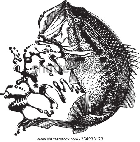 An Illustrated Bass Jumping Vector File Available Original Pen And Ink Vectorized