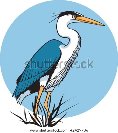 An illustrated blue Heron. Layered vector file.