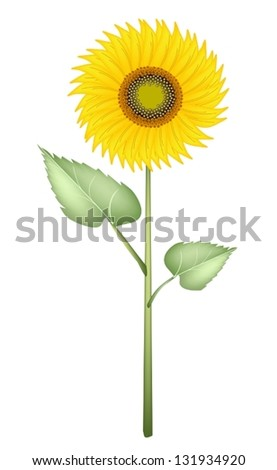 An Illustration Bright and Beautiful Yellow Colors of Sunflowers in Tight Bundle Isolated on A White Background