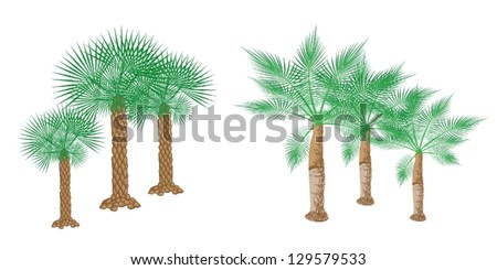 An Illustration of Landscaping Tree Symbols of Isometric Palm Trees for Garden Decoration