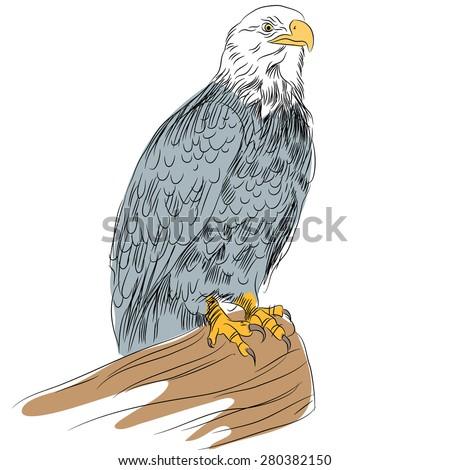 An image of a bald eagle. - stock vector