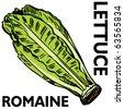 An image of romaine lettuce. - stock vector