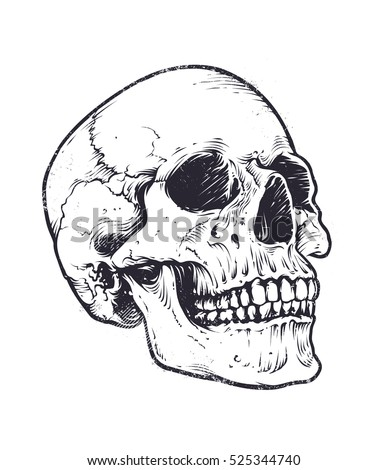 Anatomic Skull Vector Art. Detailed hand-drawn illustration of skull. Grunge weathered illustration.