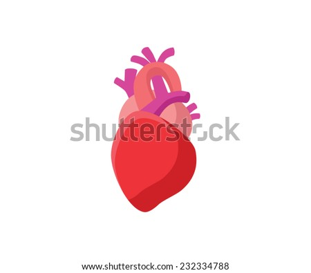 Anatomical Heart - Flat Graphic - stock vector
