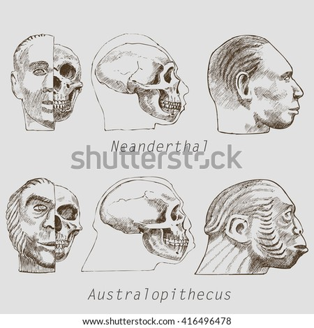 Anatomy of a skull of Australopithecus and Neanderthal. Set of sketches - stock vector