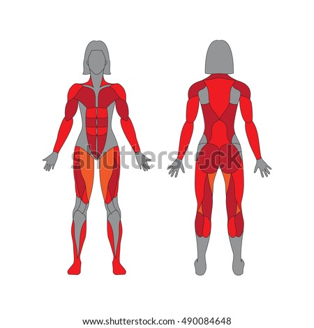 muscle oblique stock images, royalty-free images & vectors, Muscles