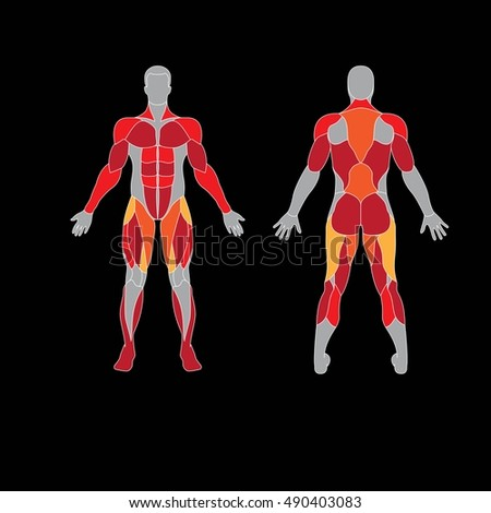 Anatomy of male muscular system on a black background. Human muscles guide. Front view, back view.
