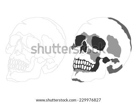 anatomy of side view skull, day of the dead
