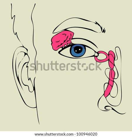 anatomy of the Lacrimal apparatus, vector illustration - stock vector