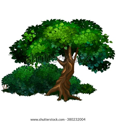 Ancient deciduous tree in the Park. Landscaping and wildlife. Vector illustration. - stock vector