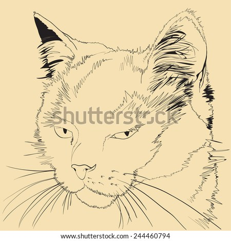 angry cat sketch illustration - stock vector