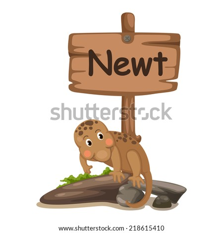 animal alphabet letter N for newt illustration vector - stock vector